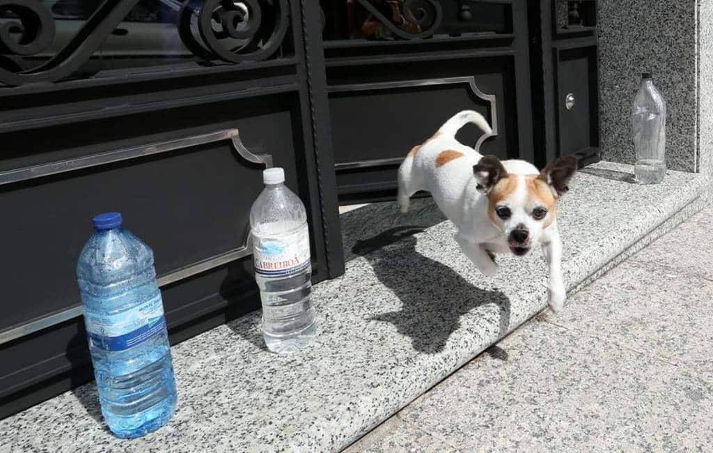 Flessen water om plassende honden te weren