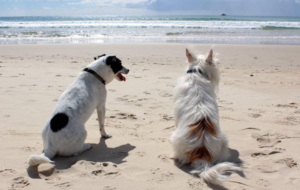 600 handtekeningen voor hondenstrand op Menorca