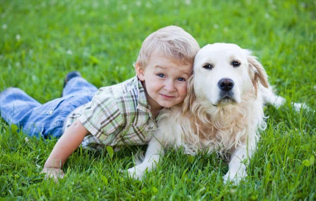Meer honden dan jongeren onder de 20 jaar in provincie Alicante