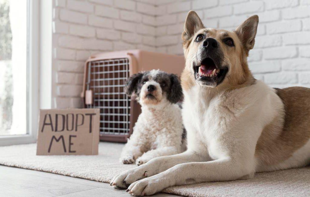 Meer adopties in 2020 maar ook meer in de steek gelaten honden in 2021 in Spanje