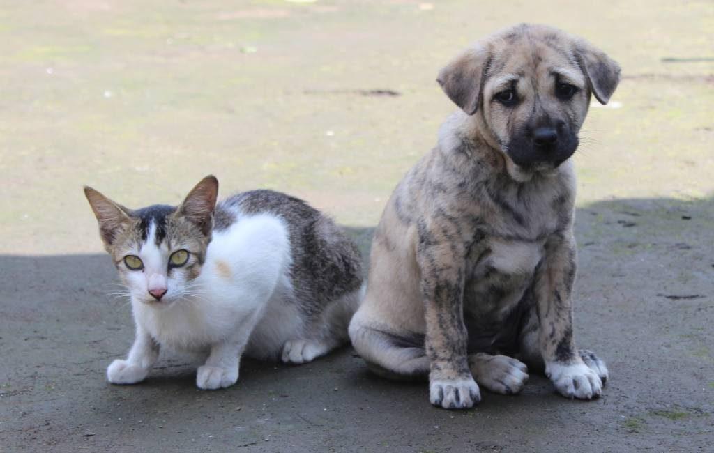 138.407 in de steek gelaten honden en katten in Spanje (2018)