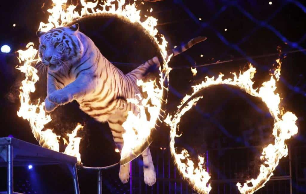 Comunidad Valencia zesde autonome regio zonder circussen met dieren