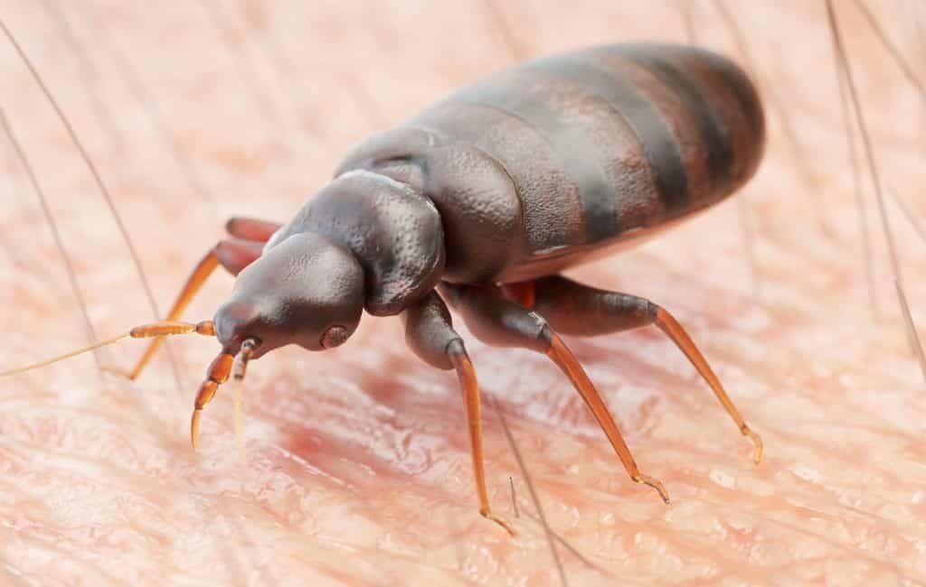 Meest voorkomende plagen in Spanje: termieten, kakkerlakken en bedwantsen