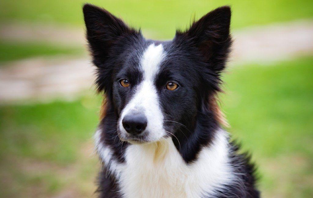 Weet jij wat de populairste hond is in Spanje of in Europa?