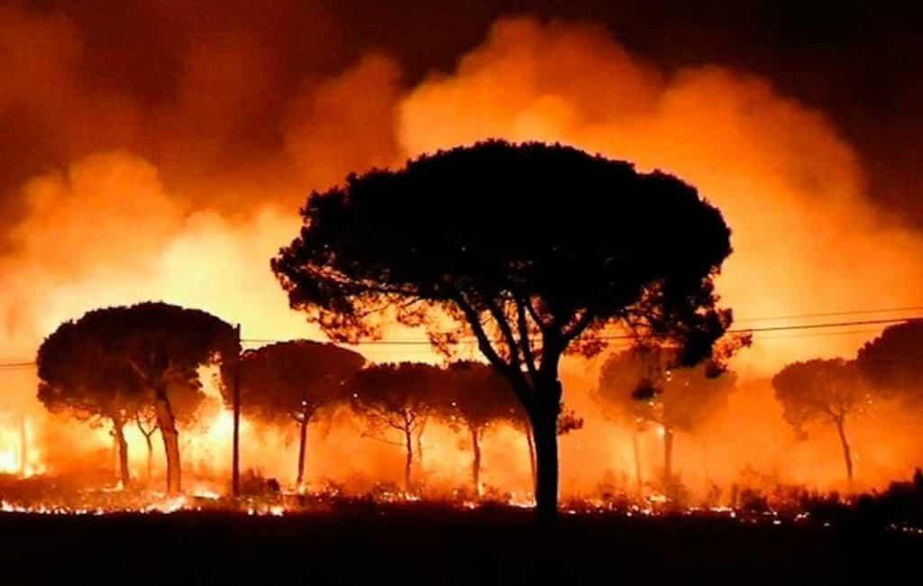 Bosbranden verwoesten bijna vier keer meer natuur in Spanje