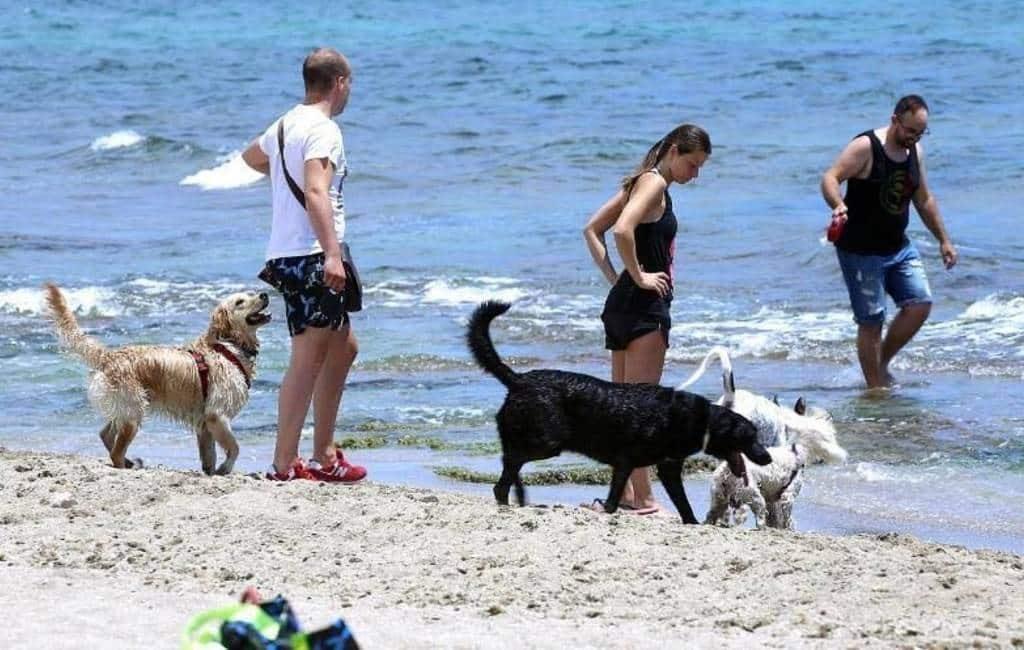 Geen extra service deze zomer op hondenstrand Alicante
