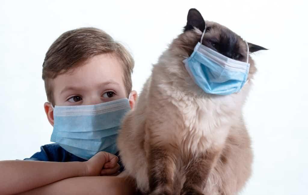 Katten hebben en dragen geen coronavirus over aldus Catalaanse dierenartsen