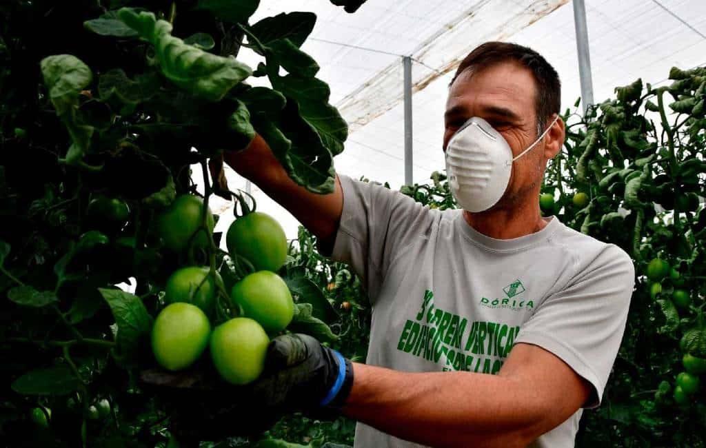 Met behoud van ww-uitkering fruit plukken in Spanje