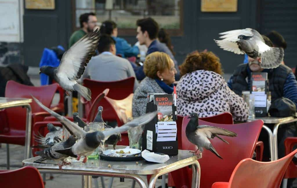 Gemeente Cádiz gaat de strijd aan met de brutale duiven