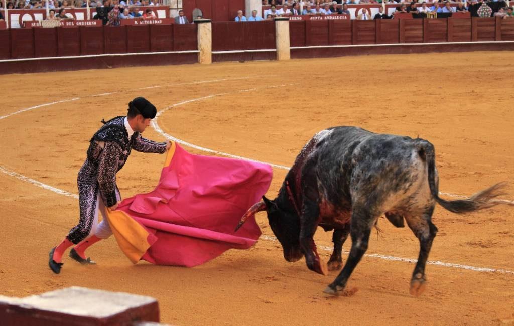De schaduwzijde van het stierenrennen in Pamplona: 54 dode stieren