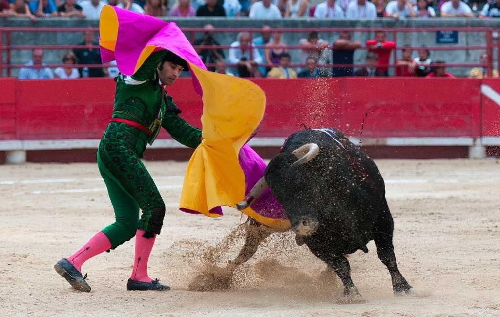 Aantal festiviteiten met stieren flink gedaald in Spanje