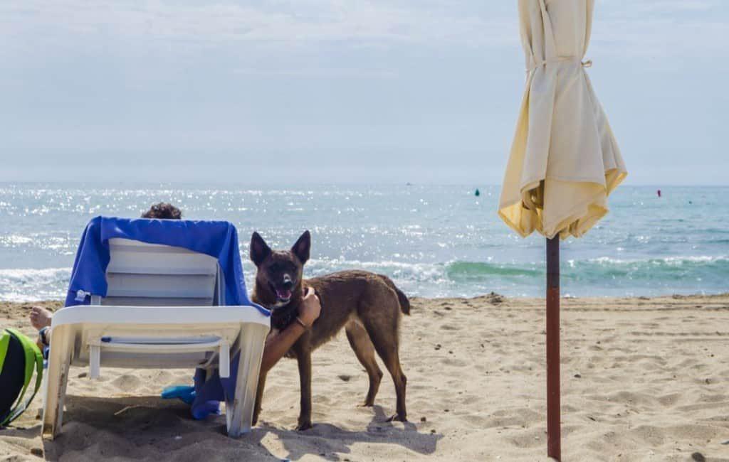 Tweede jaar zonder services op 'doggy beach' Alicante