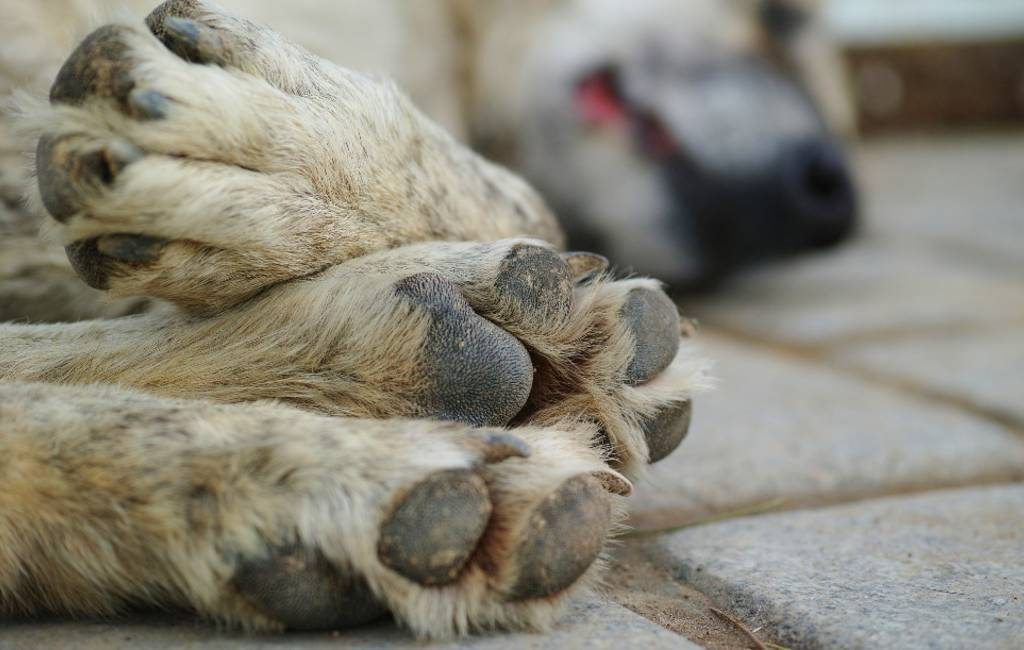Seks met dieren legaal in Canada maar hoe is dat in Spanje?