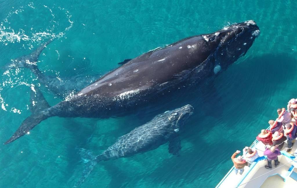 De beste plaatsen om walvissen te zien in Spanje