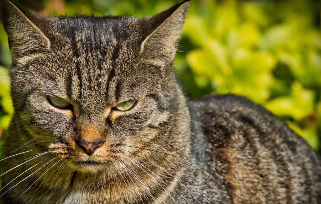 Rus schiet kat van Nederlander dood in Benidorm