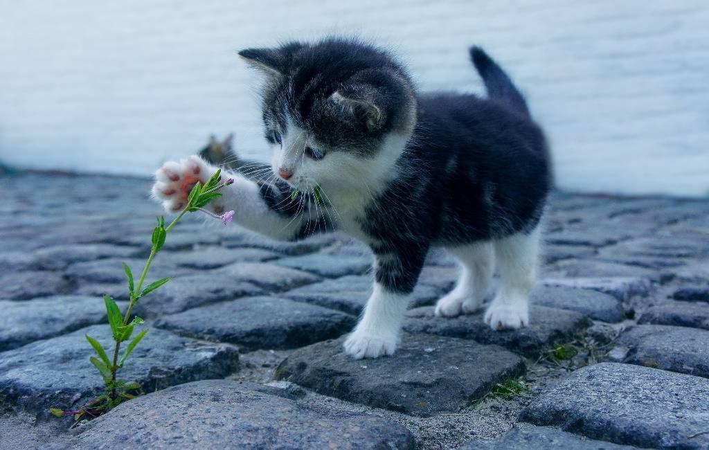 Internationale dag van de kat, ook in Spanje (video's)