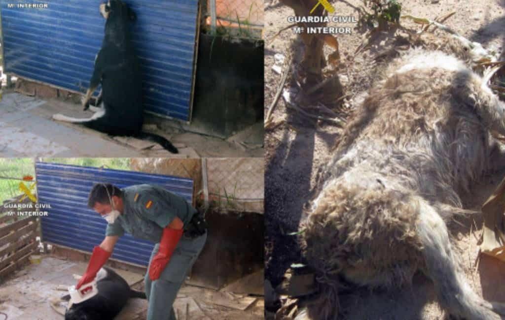 51-jarige hondenmoordenaar gearresteerd in Murcia