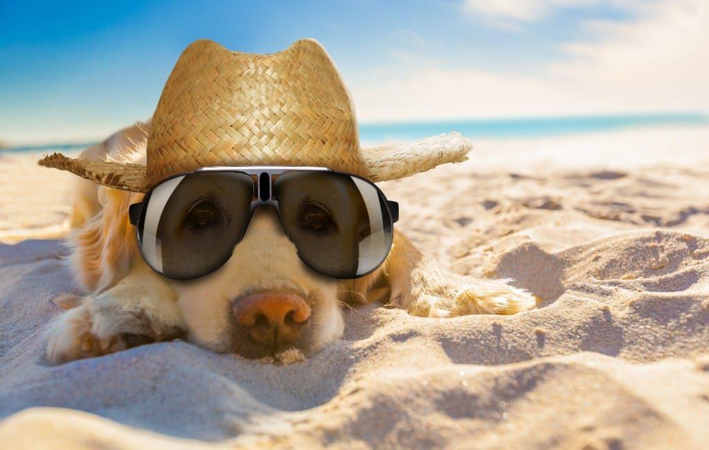 Nieuwe folder 'dog friendly' om met de hond Benidorm te bezoeken