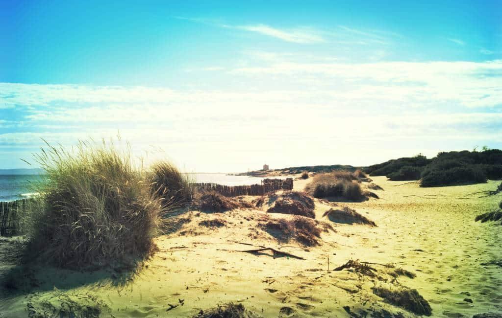 Cruising op Ibiza schadelijk voor duinen