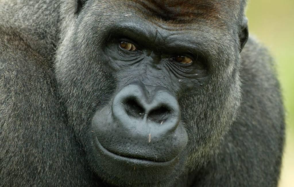 VOORBEELDFOTO / WWF