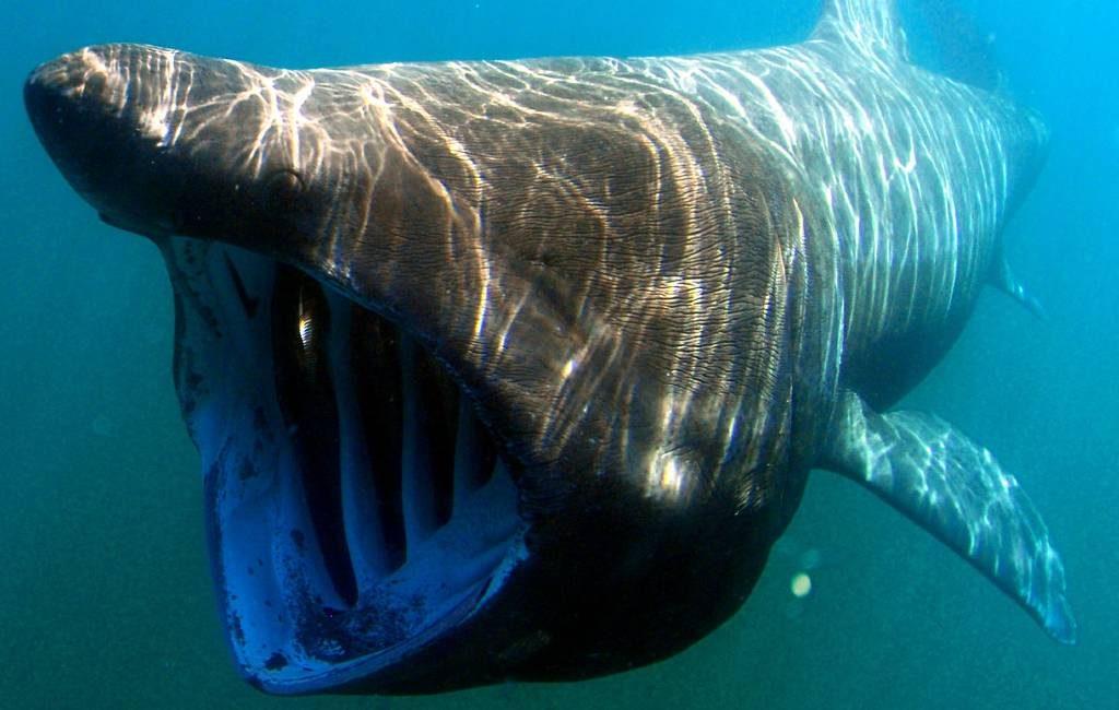 8 meter lange haai gespot voor de kust van Polopos in Granada
