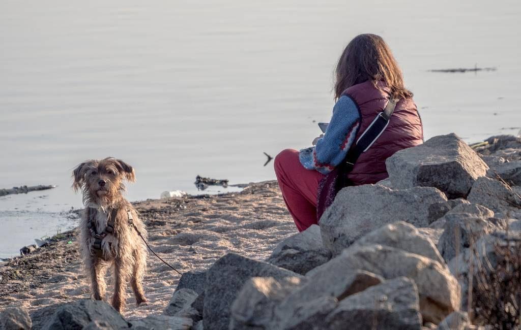 Initiatief om huisdieren uit partnergeweld situaties te redden in Spanje