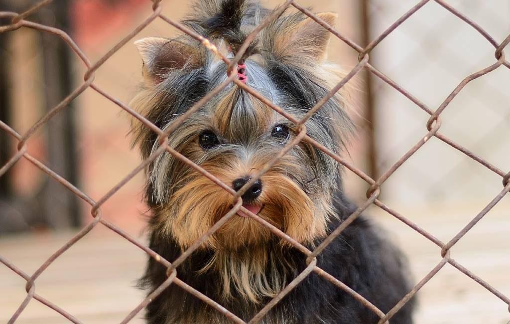 Dierenmishandeling tijdens de pandemie vermenigvuldigt in Spanje