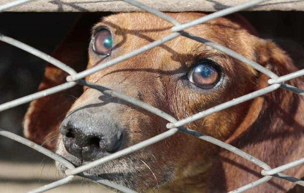 Toename in de steek gelaten honden in Spanje tot eind juni