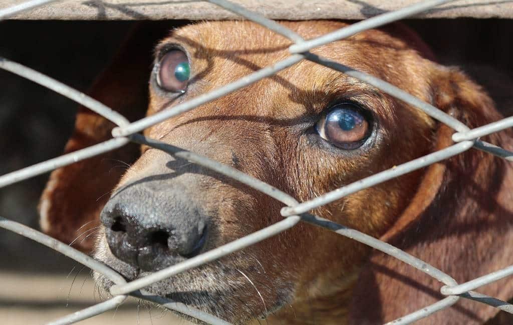 Toename in de steek gelaten honden in Spanje