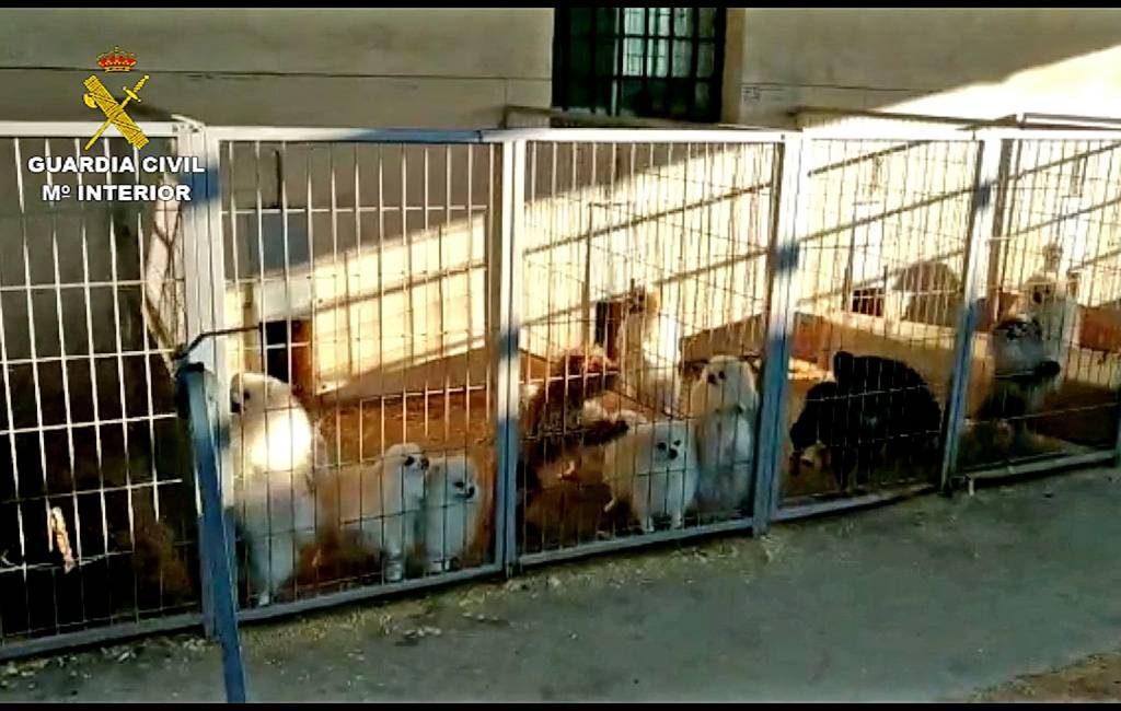 Dierenarts en fokker in Granada gearresteerd voor doorknippen stembanden honden