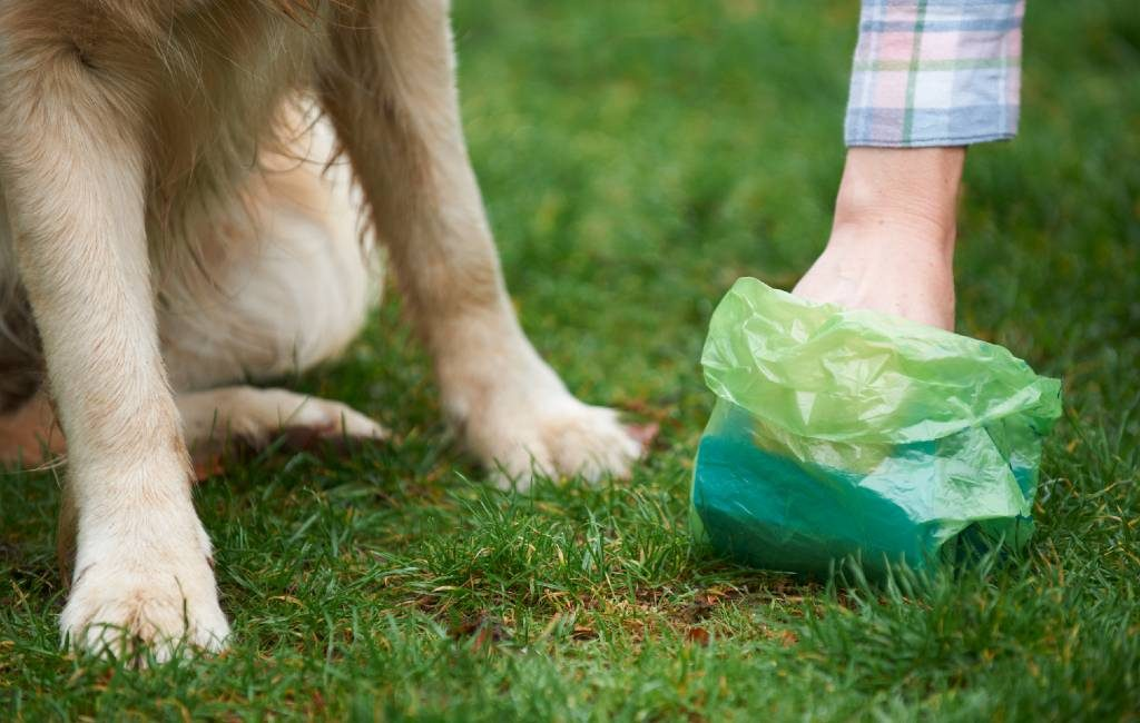 Slechts weinig gemeenten geven bekeuringen vanwege hondenpoep in Spanje