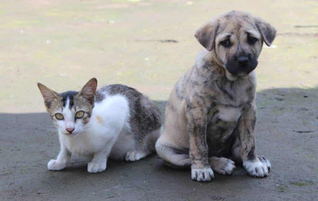 306.000 in de steek gelaten honden en katten in Spanje (2019)