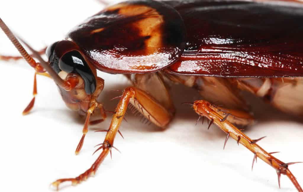 Meer muggen, kriebelmuggen, kakkerlakken en knaagdieren verwacht in Spanje