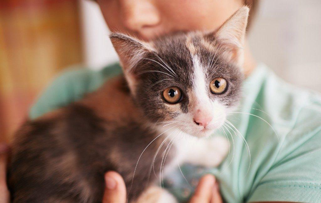 Spanje viert op 20 februari een van de drie Internationale Kattendagen
