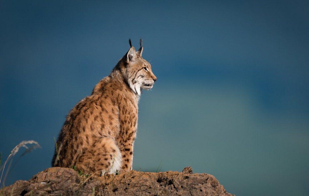 Spanje in de top drie van beste Europese wildlife bestemmingen in 2021