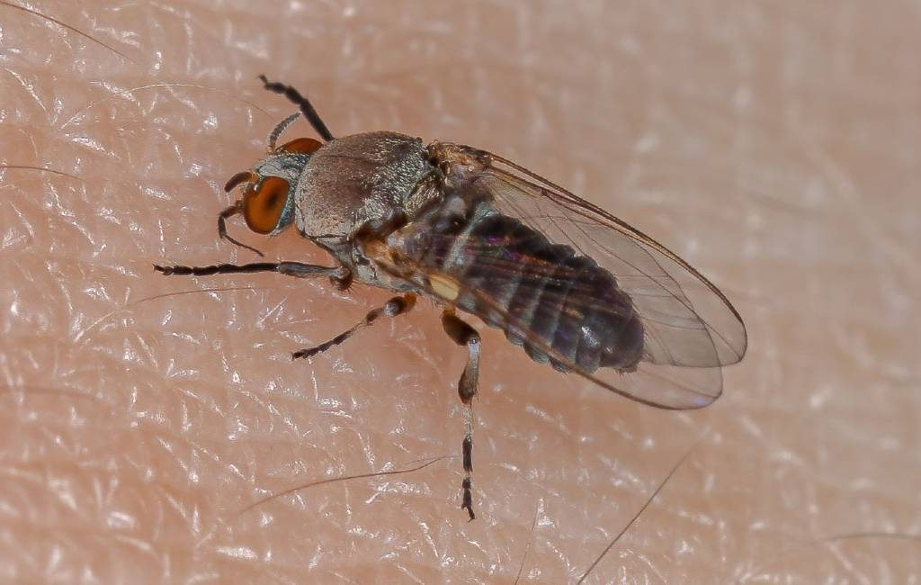 Hittegolf zorgt voor meer insectenplagen in Spanje