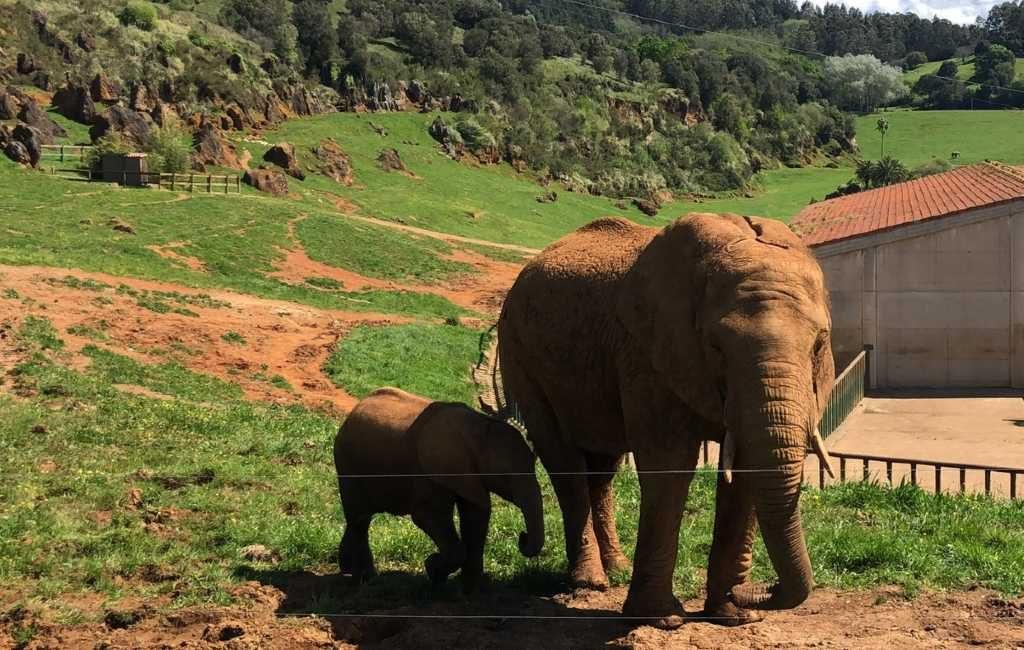 Werknemer Cabárceno natuurpark dodelijk door olifant geraakt in Cantabrië