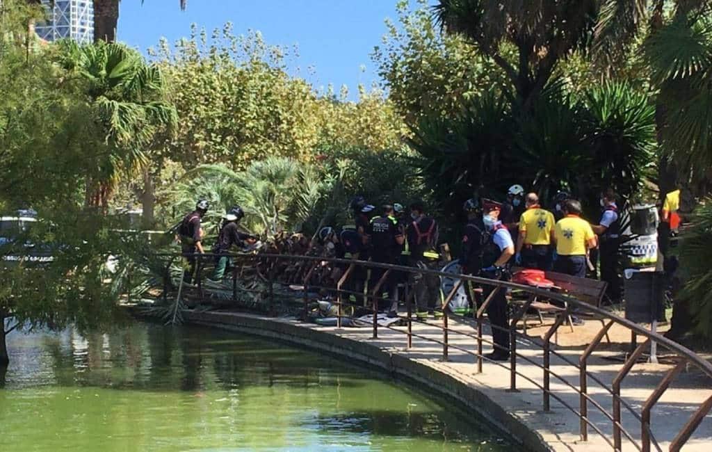 Een dode en een gewonde door omvallende palmboom in stadspark Barcelona