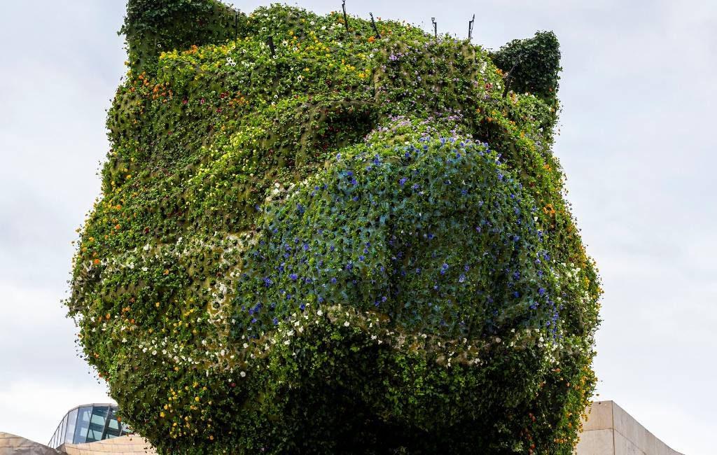 De Puppy van het Guggenheim in Bilbao Krijgt mondkapje van bloemen