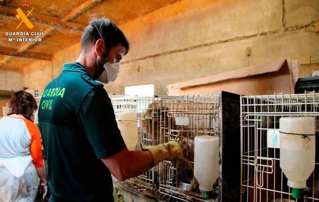 Politie vindt 544 honden in een erbarmelijk staat in Zaragoza