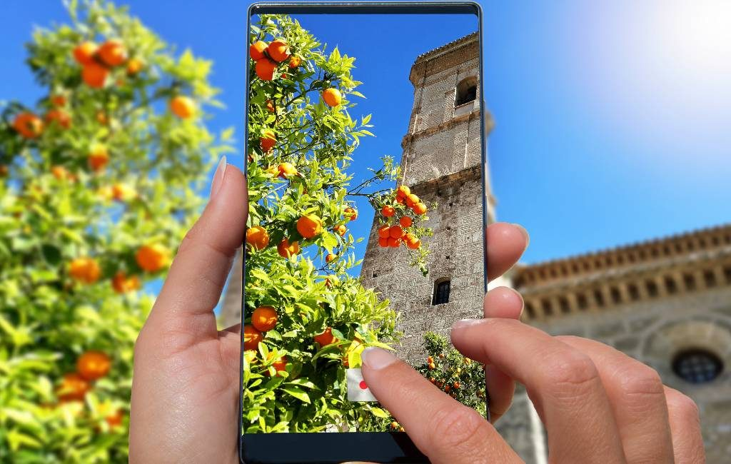 Wat te doen met de stads-sinaasappels in Málaga