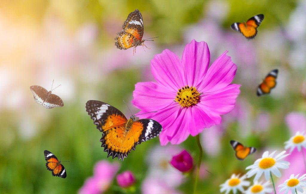 Malgrat de Mar krijgt eerste openbare vlinderbos van Catalonië