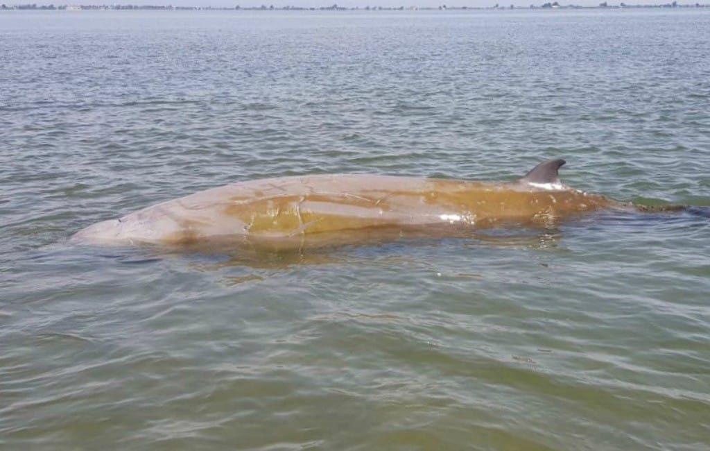 Politie en omstanders redden walvis in de Ebro Delta in Tarragona